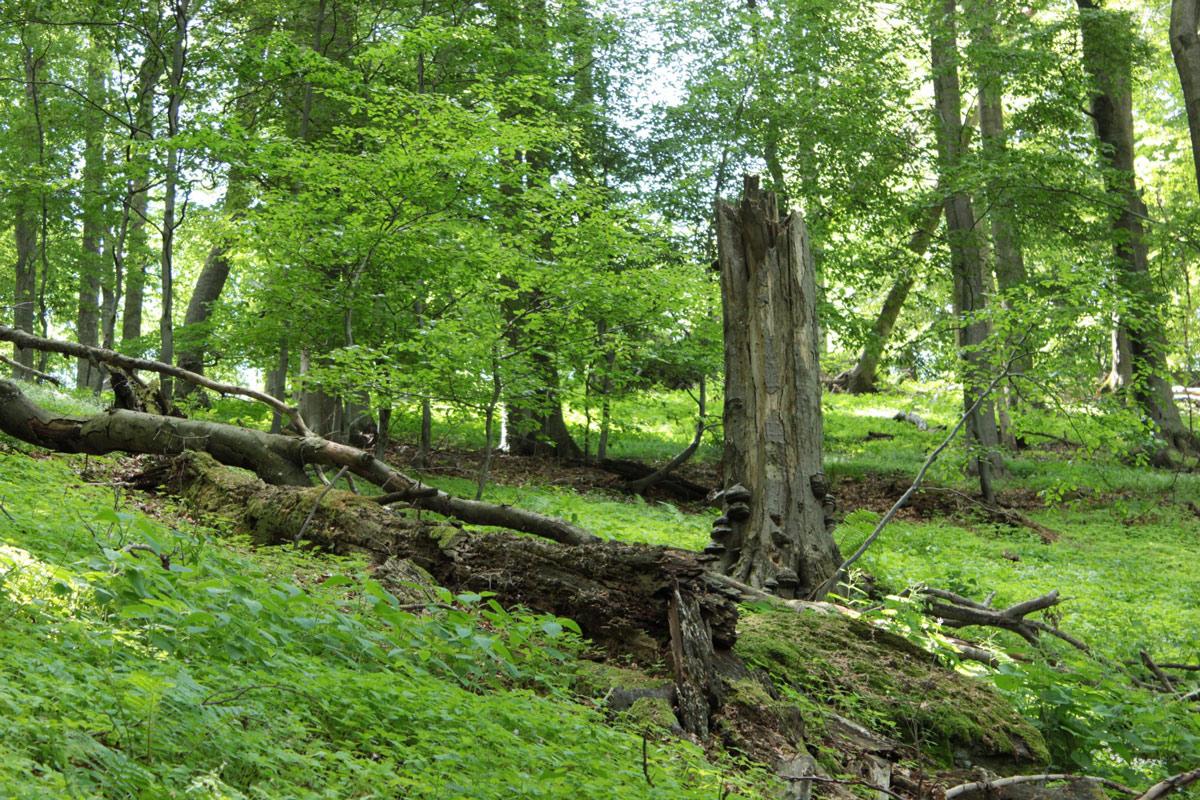 szén-dioxid-kor a fák