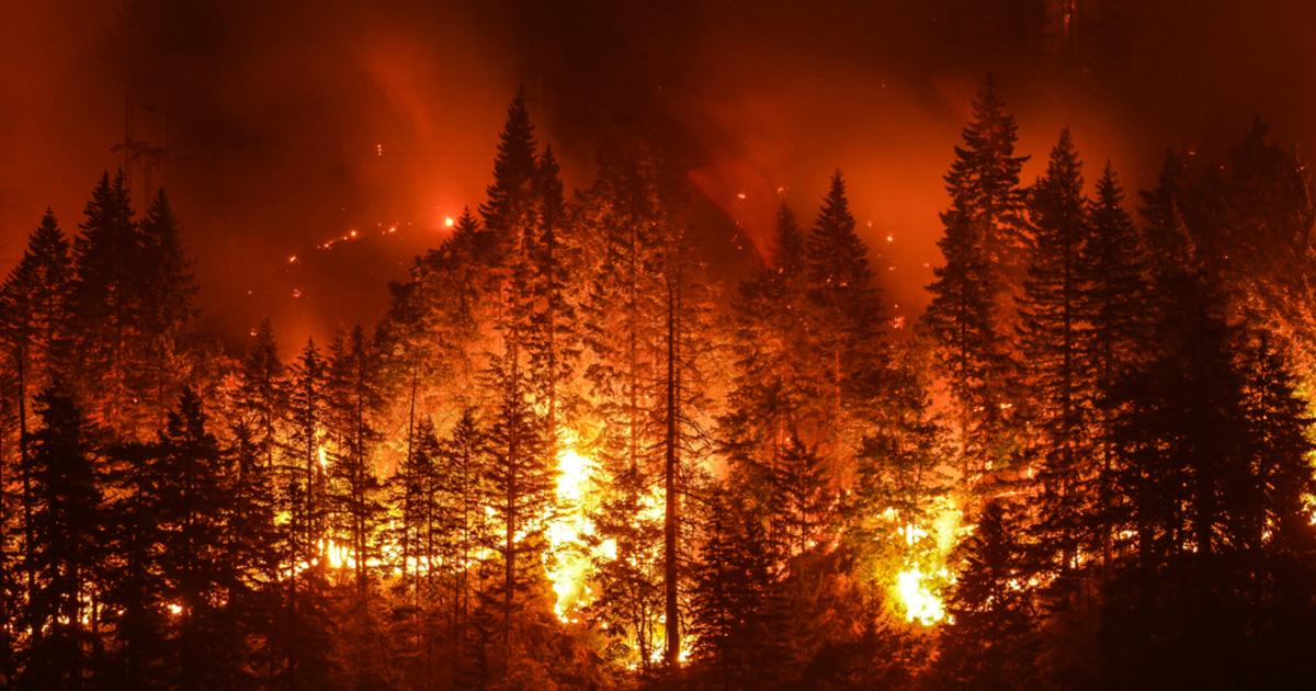 Hatalmas erdőtűz tombol a Jeruzsálem környéki hegyekben | Demokrata