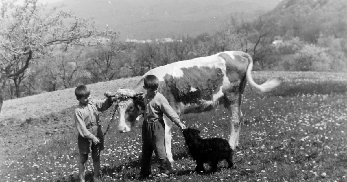 Fényes és véres vidéki napok 1956-ban | Demokrata